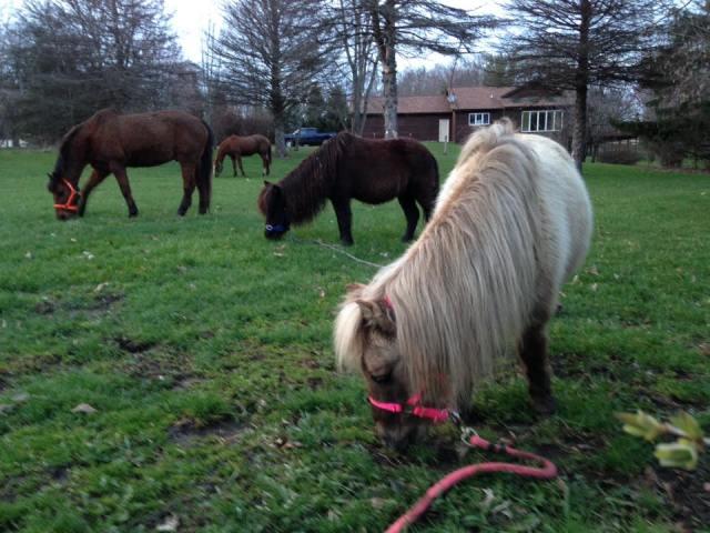 Horses 04-04-2017